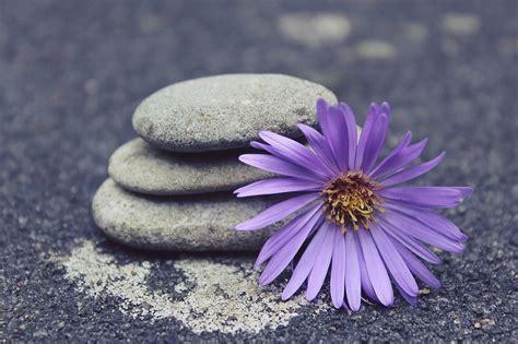 giardini zen in miniatura giardino zen in miniatura da tavolo o da casa come