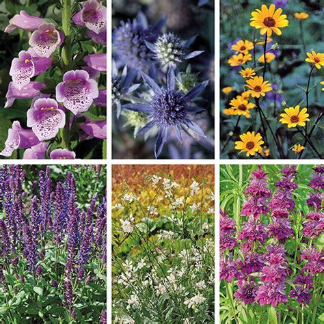 flowering shrub collection year flowering perennial plant collection