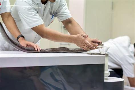 Serum Anti Bisa Ular serum anti bisa ular dapat mengatasi efek racun dalam