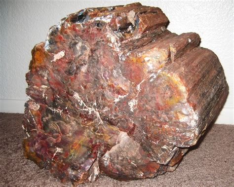 petrified wood petrified wood show me rockhounds kansas city
