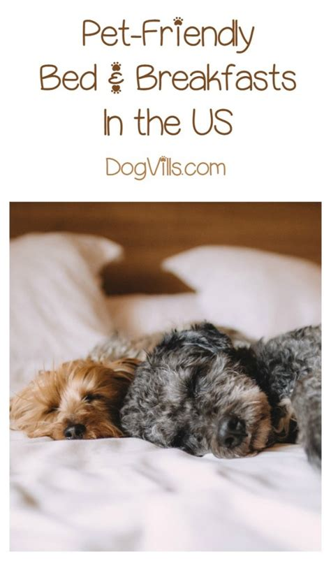 pet friendly bed and breakfast dog friendly bed and breakfast 28 images dog friendly