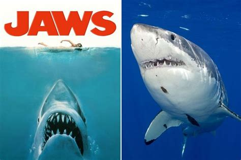 jaws biography channel documentary jaws gave sharks a bad name but new documentary shows us