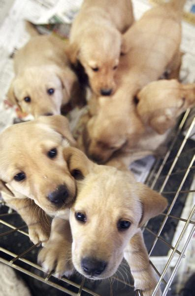 how to deliver puppies uber will deliver puppies to you on wednesday redeye chicago
