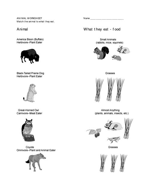 printable worksheets about animal habitats 13 best images of 1st grade science worksheets animals