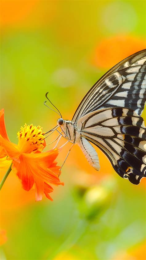 wallpaper butterfly   wallpaper colorful flowers