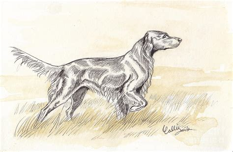 setter dog drawing how to draw setter irish
