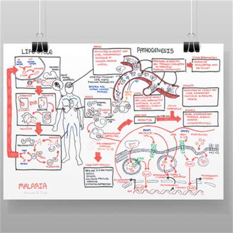 pathophysiology of malaria diagram home 183 armando hasudungan 183 store powered by storenvy