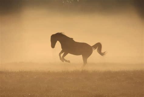 pictures mustang horse with smoke dust wallpapers desktop wallpaper 187 goodwp com
