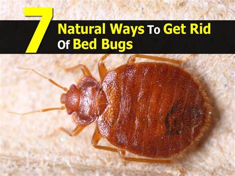 natural ways   rid  bed bugs