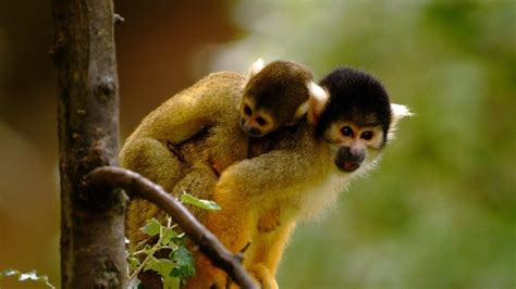 monkey background cute monkeys wallpaper 1045363