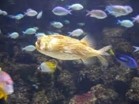 intossicazione alimentare pesce segni e sintomi di intossicazione alimentare da pesce