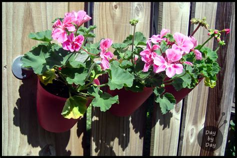 Flower Planters For Fences by Garden Fence Planters Day By Day