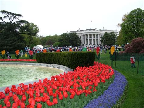 white house rolls how to get white house easter egg roll tickets family