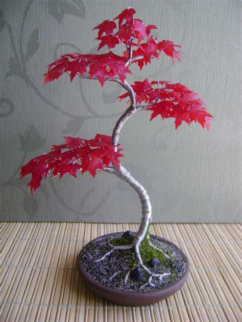 Bibit Bonsai Maple musim panas merah maple promotion shop for promotional