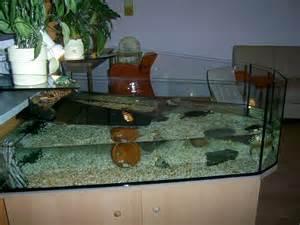 wie verkaufe ich mein haus hallo ich verkaufe aus zeitgr 252 nden mein aquarium wurde