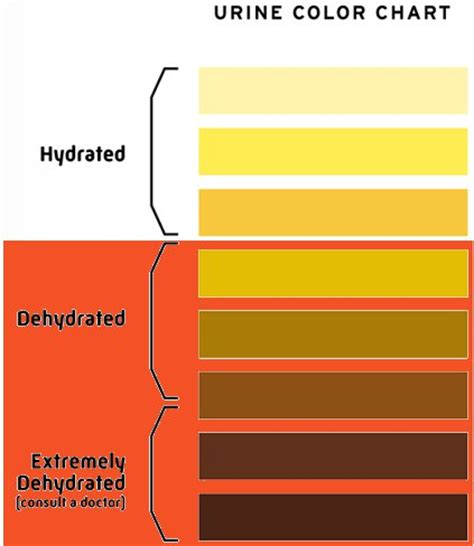 color of urine when dehydrated healthy wealth how much water should you drink salt for you
