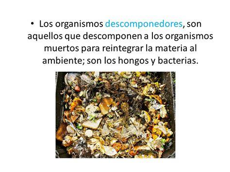 cadena alimenticia que son los consumidores cadenas alimentarias los organismos de una cadena tr 243 fica