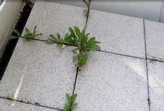 Pflanzen Am Balkon 3396 by Die 25 Besten Ideen Zu Pflegeleichte Balkonpflanzen Auf