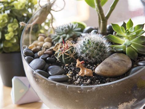 best plants for self contained terrarium how to make a self sustaining terrarium