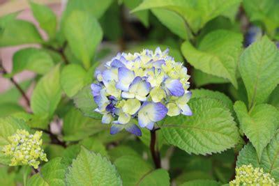 Bluehende Straeucher Fuer Den Garten by Bl 252 Hende Str 228 Ucher F 252 R Den Garten Unsere 87 Lieblinge