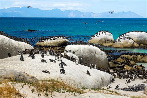 table mountain national park 9 secrets of table mountain national park that will