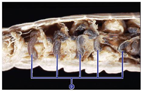 earthworm dissection guide carolina hook into earthworm anatomy carolina