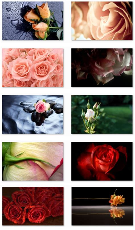 rose themes for windows 8 1 desktop fun roses theme for windows 7 valentine s day