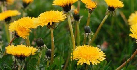 elenco fiori autunnali 10 erbe selvatiche e piante commestibili che potete