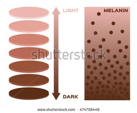 melanin stock images royalty free images vectors