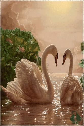 swan boats gif swans gif swans discover share gifs
