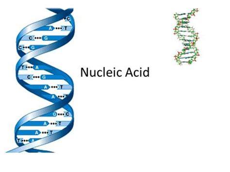 exle of nucleic acid nucleic acids nucleic acid basics contain to