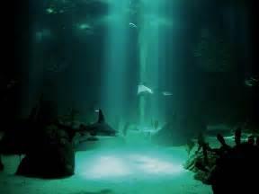 wallpaper hd underwater desktop wallpapers