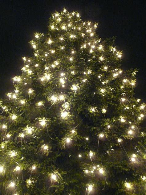 weihnachtsbaum lichterkette kostenloses foto weihnachtsbaum weihnachten