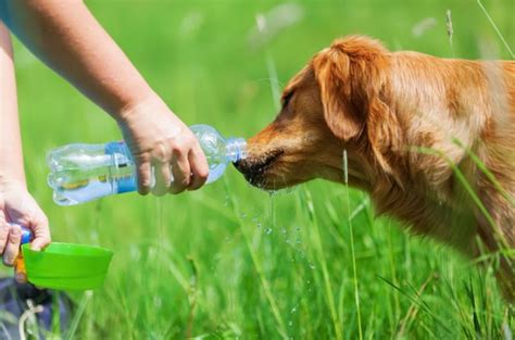 how can a puppy go without how can dogs go without water lovepetjournal
