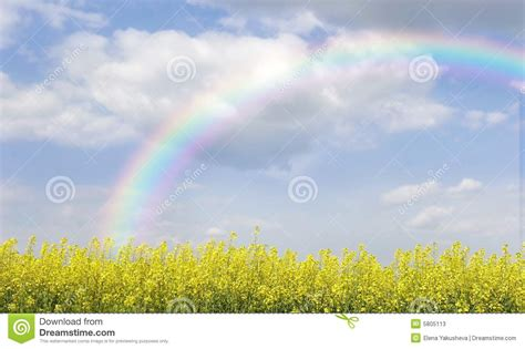 Green Bench Flowers Rainbow Over Field With Yellow Flowers Stock Photos
