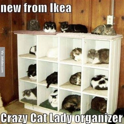 Ikea E Gift Card - new from ikea cat meme jokes memes pictures