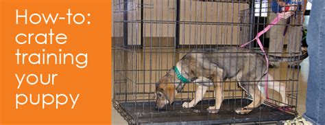 crate how to crate your puppy in just 3 days a step by step program so your pup will understand you books crate a puppy for of cats and dogs