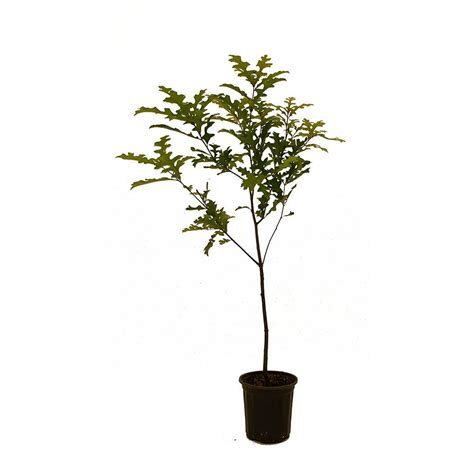 the home depot trees 28 images artificial trees at