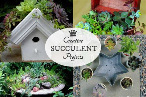 diy succulent projects diy succulent garden ideas empress of dirt