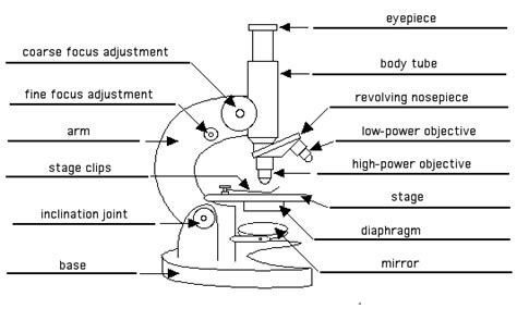 color the microscope parts color the microscope parts worksheet color of