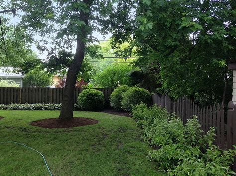 trees for small backyards backyard landscaping in arlington heights landscaping and