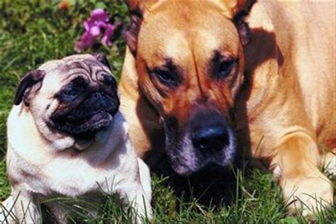pug bladder infection symptoms pet insurance