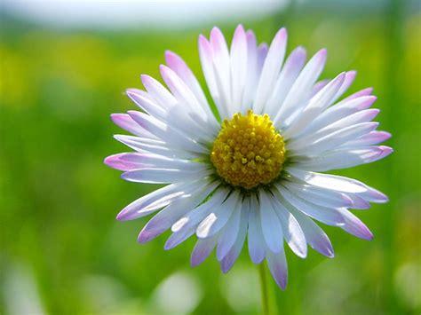 foto di fiori primaverili fiori primaverili foto di fiori primaverili immagini