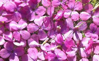 fiori di bach opinioni il dei fiori di bach indipendenza e fiori di bach