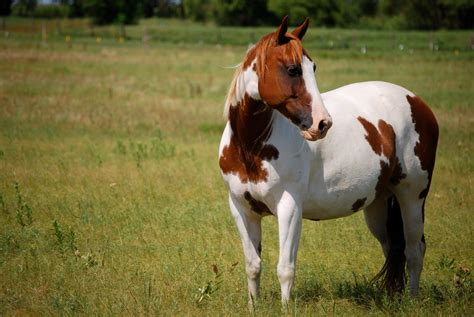 painting horses paint wallpapers wallpaper cave