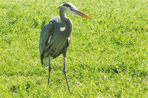 ojai meadows preserve birds ovlc ovlc
