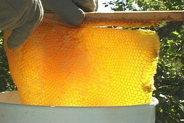 harvesting honey comb top bar hive beekeeping pinterest