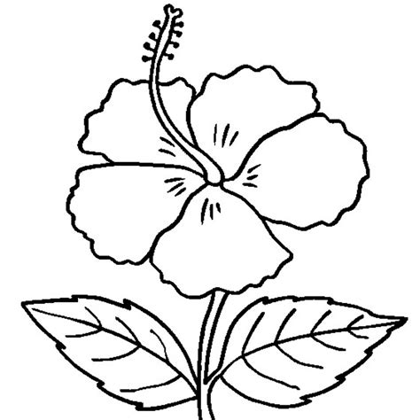 Free Printable Hibiscus Coloring Pages For Kids Childrens Printable Colouring Pages