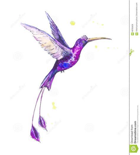 kolibri aquarell stock abbildung bild 69782828