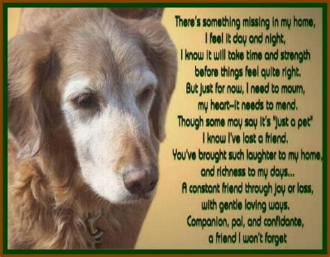 golden retrievals poem golden years quotes like success
